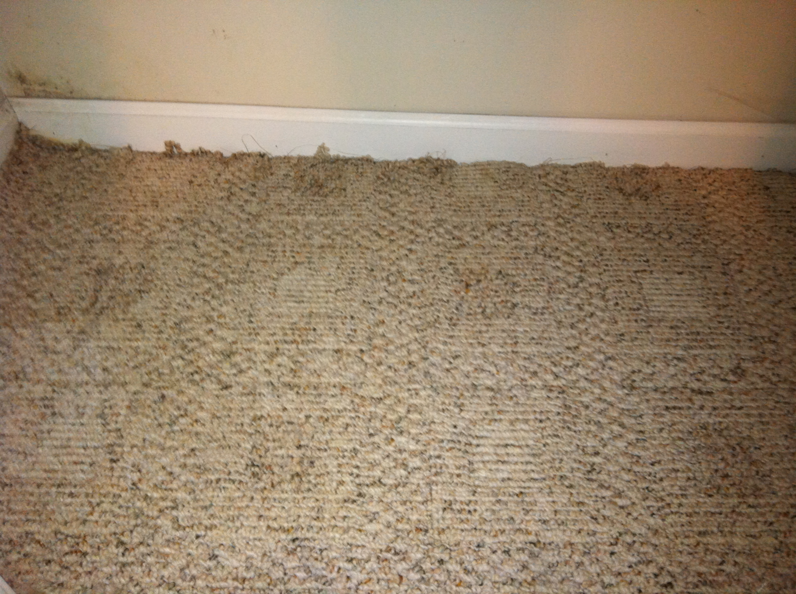 Carmel Water Damage Berber Repair Indianapolis Carpet Repair