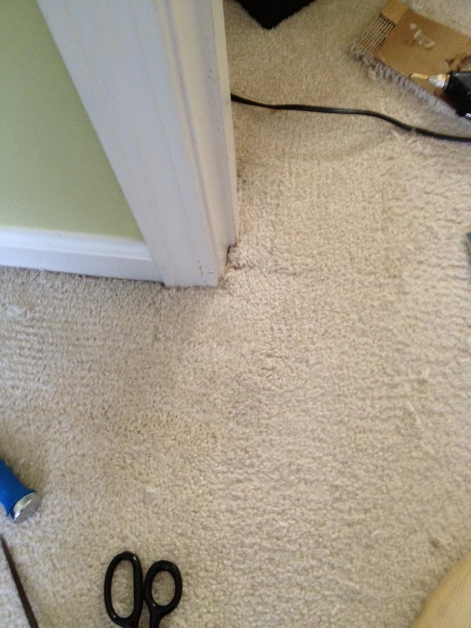 Indianapolis Cat Carpet Damage Repair