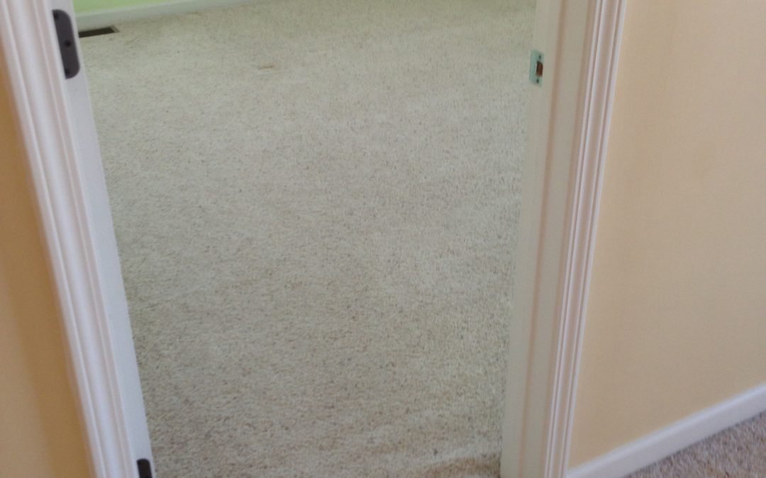 Greenwood Carpet Restretch