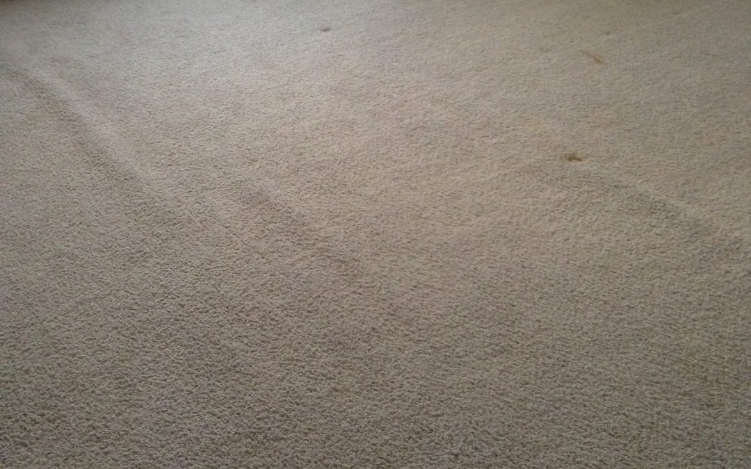 Carpet Re-stretch in Greenwood, IN