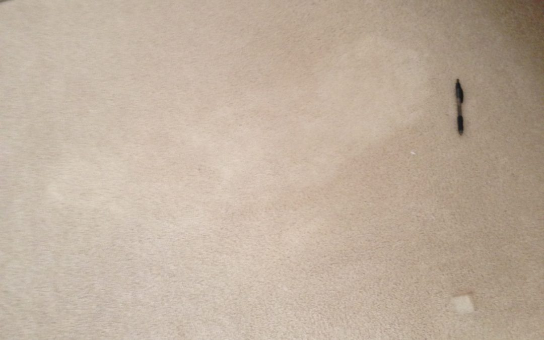 Large Bleach Stain Repair in Indianapolis