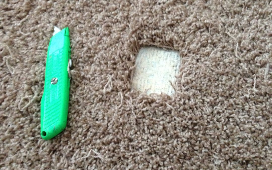 Bad Dog Carpet Damage in Carmel; Indianapolis Carpet Repair To The Rescue