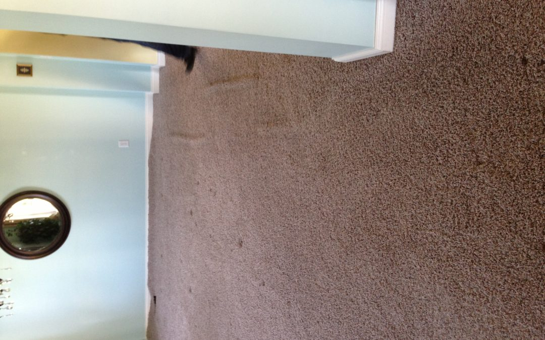 Carpet Stretching in Greenwood Home