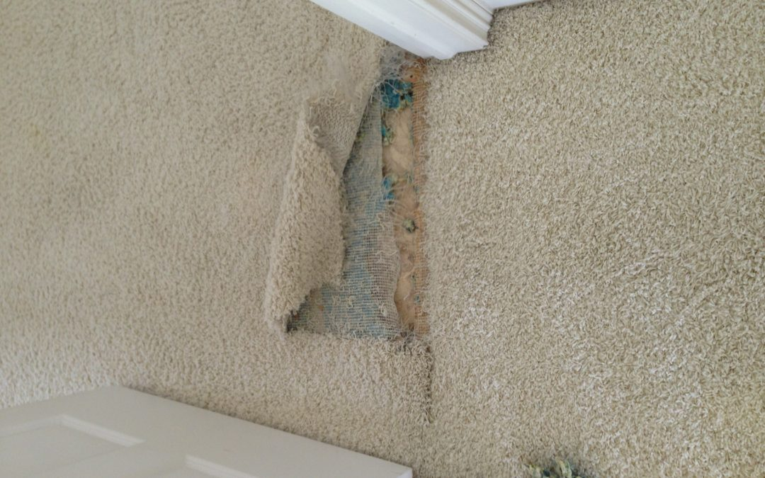 Carpet Delamination in Carmel