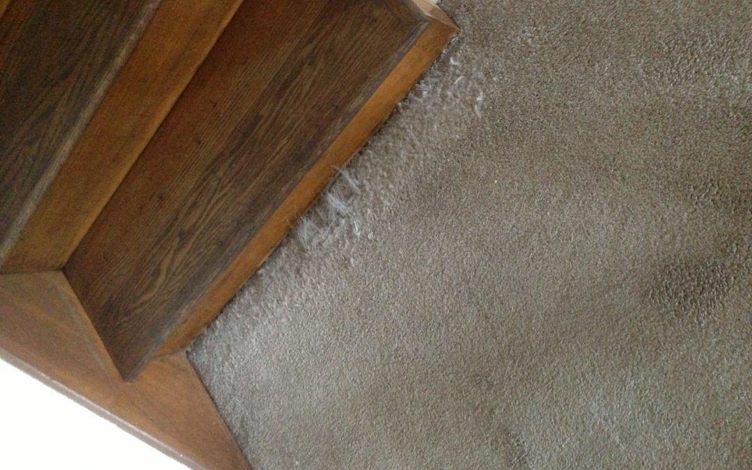 Carpet Damaged by Cat in Greenwood