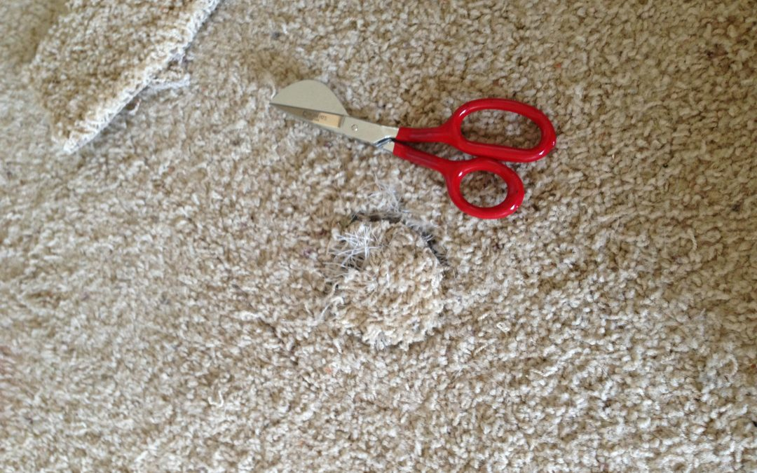Pets Damaged Carpet in Home in Noblesville